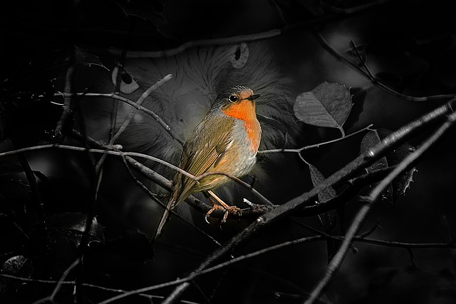 Creative, Bird, Nature, Robin