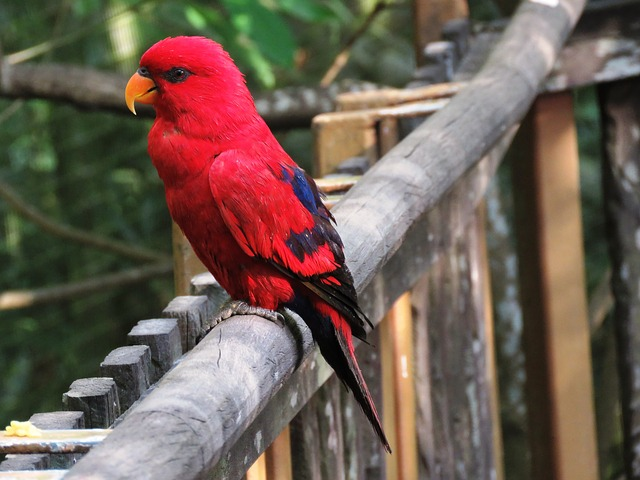 Parrot, Bird, Beautiful Bird, Cute Bird