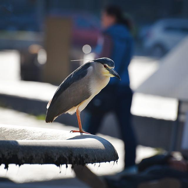Bird, Wildlife, Outdoors, Daylight, Wing, Avian