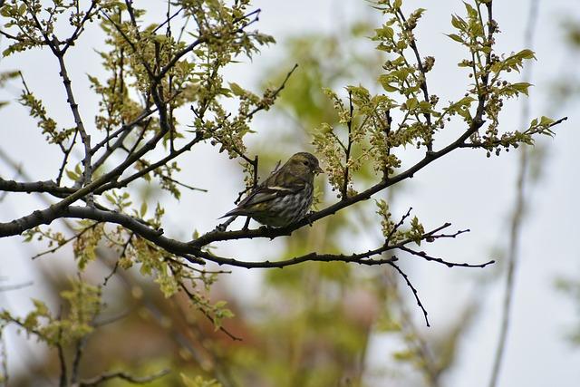 Animal, Forest, Wood, Nuts, Diet, Bird, Wild Birds