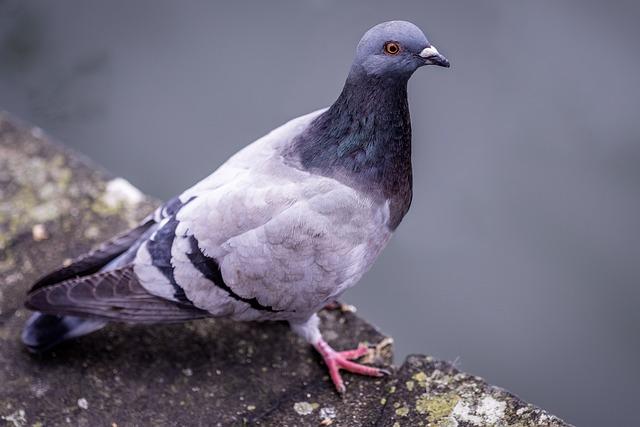 Dove, Bird