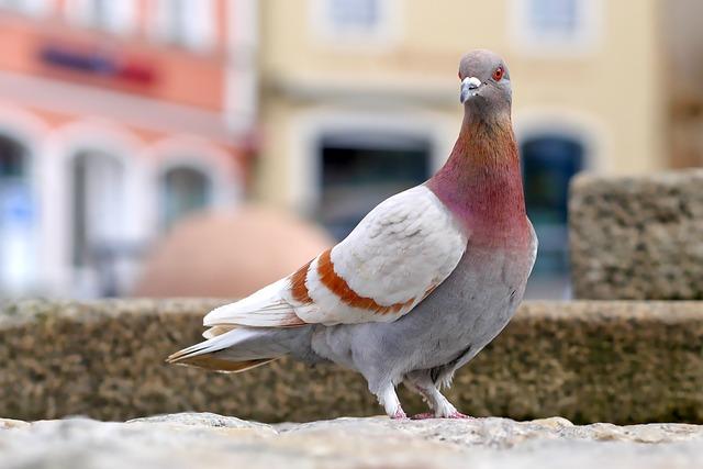 Dove, Bird, Feather, Nature, Plumage, Animal World