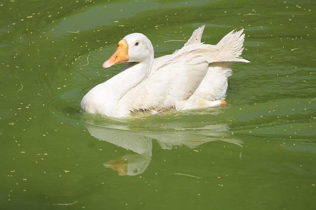 Pool, Water, Bird, Nature, Lake, Wildlife, Duck