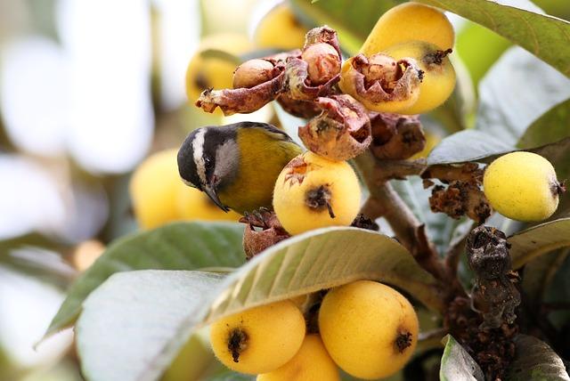 Colorful Bird, Eating Seeds, Bird, Tropical Passarolo