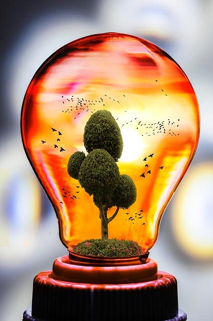 Eco, Nature, Bulb, Tree, Bird, Natural