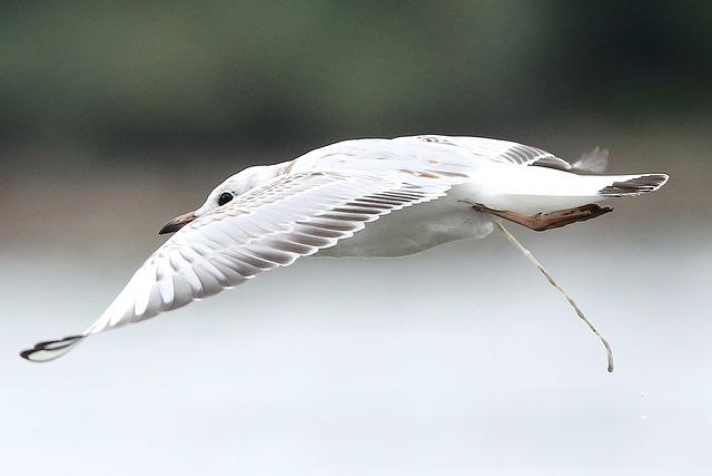 Bird, Wing, Feather, Nature, Animal World, Animal