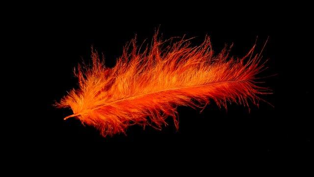 Feather, Bird Feather, Orange, Colorful, Tender, Fine