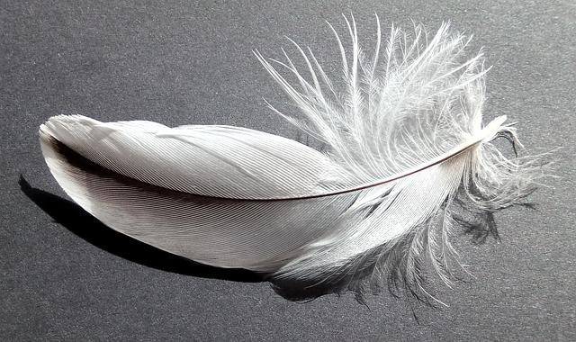Bird Feather, Soft, White, Grey, Black, Nature, Fauna