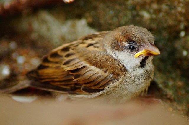 Tweeter, Bird, Wildlife, Wild, Feathers, Feather