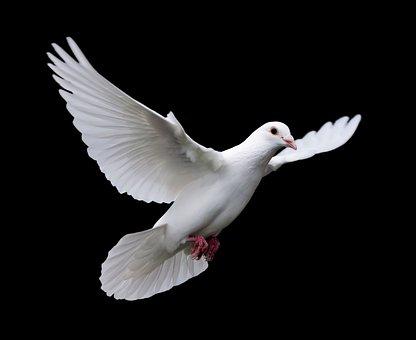 Bird, Nature, Wildlife, Feather, Pigeon, Animal, Wing
