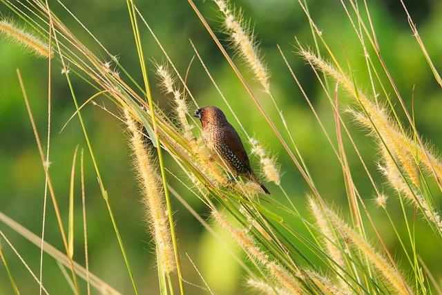 Bird, Feed, Nature, Maya Bird