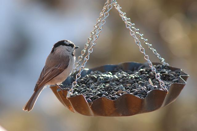 Bird, Finch, Feeder, Bird Feeder, Niger Seed