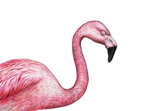 Flamingo, Exotic, Bird