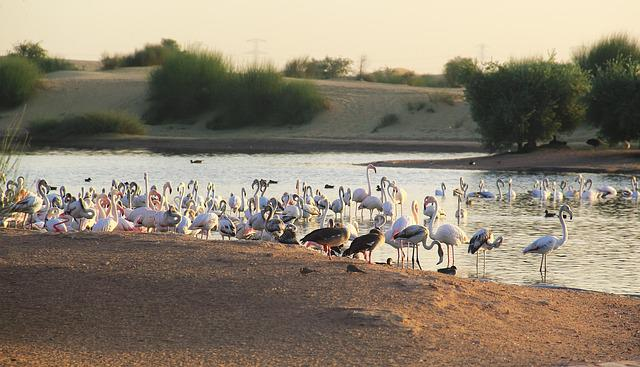 Water, Bird, Lake, Flamingo, Outdoors, River, Landscape