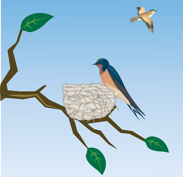 Barn Swallow, Schwalbe, Bird, Birds, Bird Flight