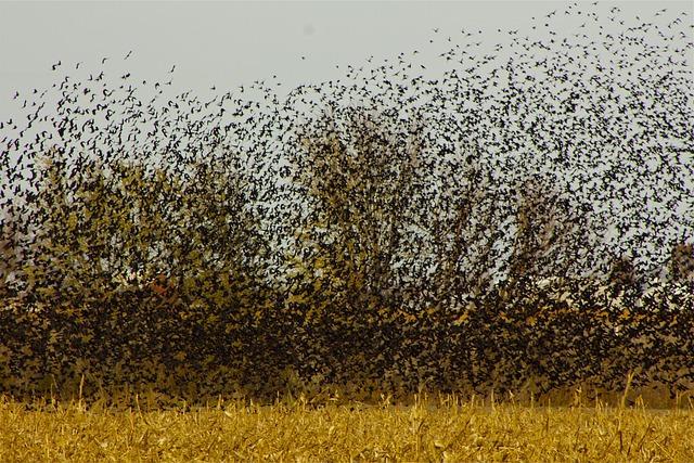 Bird, Flock, Blackbirds, Birds Flying, Flying, Wing