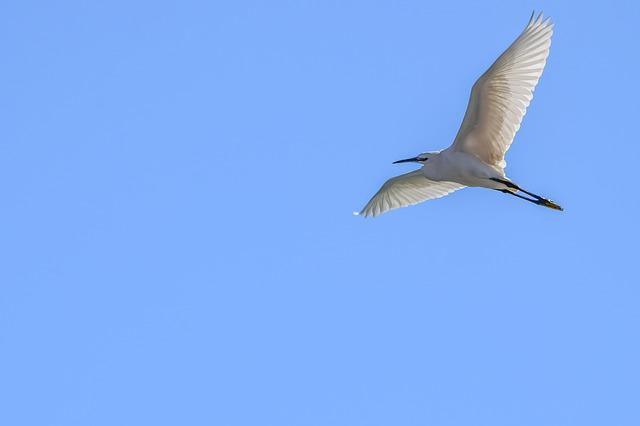 Heron, Bird, Nature, Wildlife, Flying, Flight, Freedom