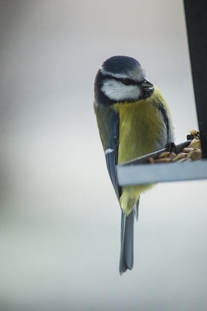 Small Birds, Bird Table, Bird Food, Bird, Seed, Feeding