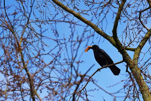Crow, Bird, Animal, Corvid, Wildlife, Sitting, Food