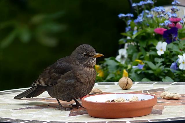 Bird, Throttle, Turdus Philomelos, Foraging, Garden