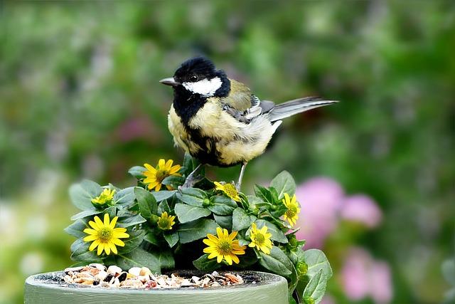 Bird, Sunflower Seeds, Garden, Flowers
