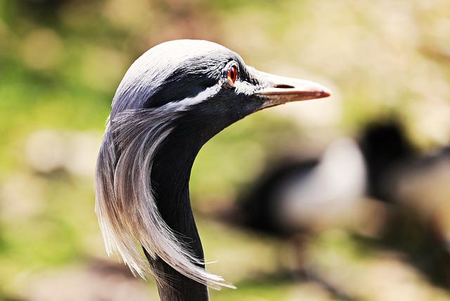 Heron, Bird, Nature, Grey Heron, Eastern, Animal