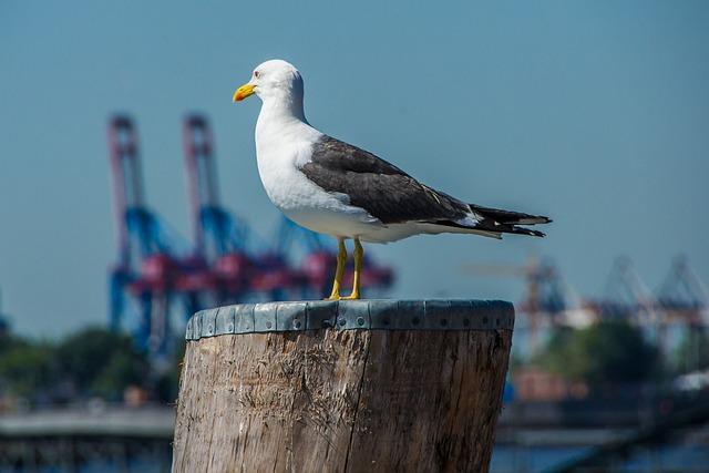 Gull, Investors, Hamburg, Port, Waters, Bird, Nature