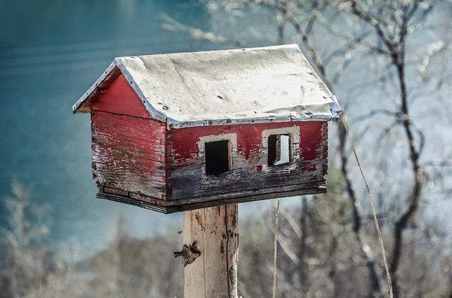 Feeder, House, Bird, Feed, Tree, Food, Winter, Wildlife