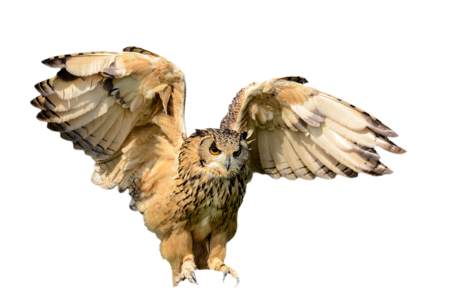 Animals, Bird, Owl, Fly, Wing, Hunting Bird, Isolated