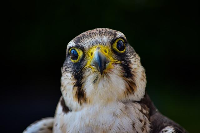 Bird, Kestrel, Falcon, Hawk, Animal, Nature, Wildlife