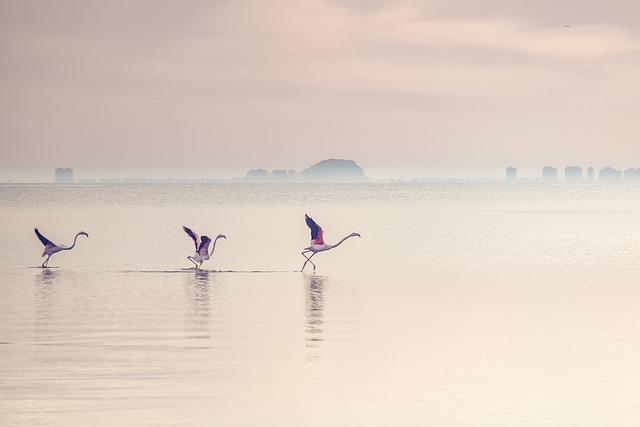 Waterscape, Flamingos, Lagoon, Lake, Water, Bird