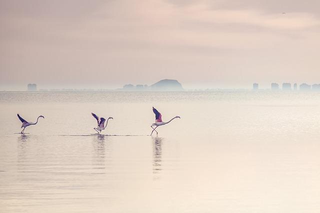 Waterscape, Flamingos, Lagoon, Lake, Water, Bird