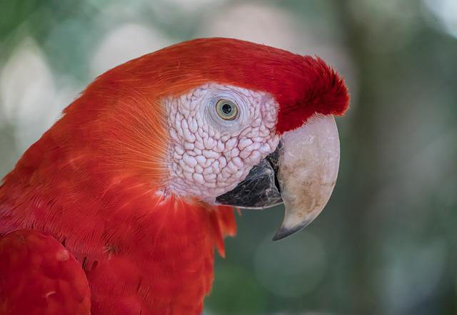 Macaw, Bird, Wildlife, Nature, Animal, Parrot, Tropical