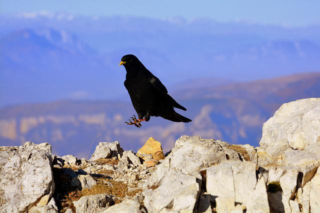 Merlo, Bird, Mountain, Rock, Beak, Nero, Animal