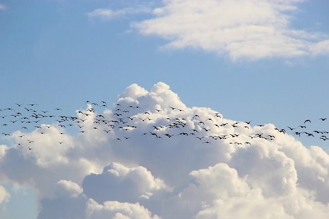 Bird Migration, Migratory Birds, Flock Of Birds, Sky
