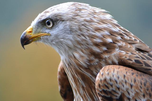 Milan, Wildlife Park, Bird, Nature
