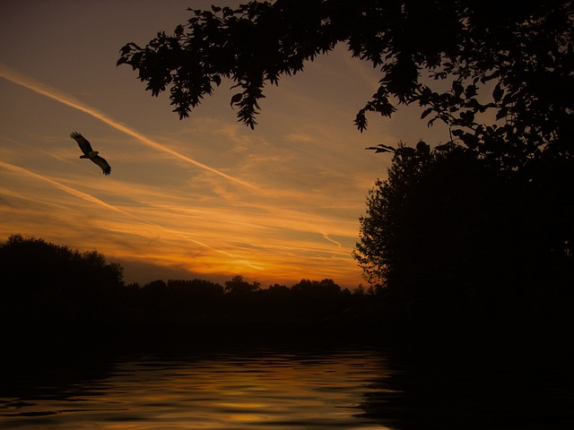 Sunset, Lake, Mirroring, Wave, Bird, Mood, Landscape