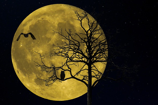 Nature, Landscape, Tree, Winter, Moon, Night, Bird, Owl