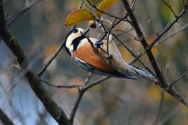Bird, Wild Animals, Natural, Outdoors, Wood, Machine