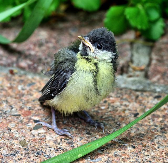 Tit, Bird, Nature, Animal