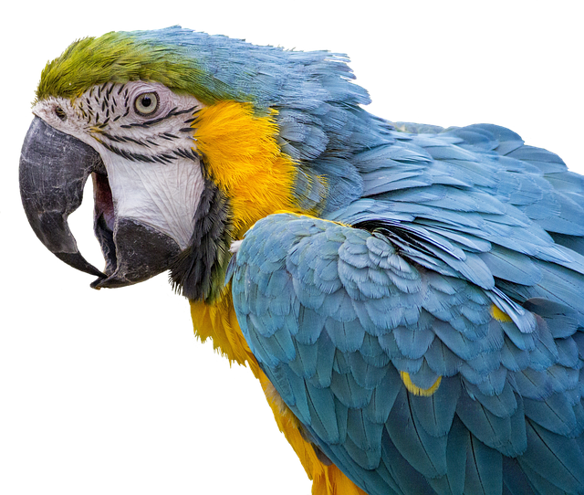Parrot, Ara, Bird, Feather, Bill, Animal, Nature