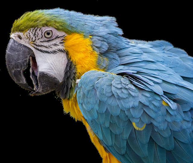 Parrot, Ara, Bird, Feather, Bill, Animal, Nature