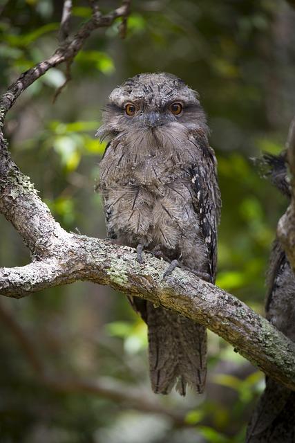 Australia, Bird, Nature