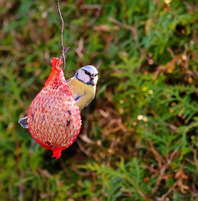 Tit, Bird, Eat, Nature, Bird Seed, Small Bird, Animals