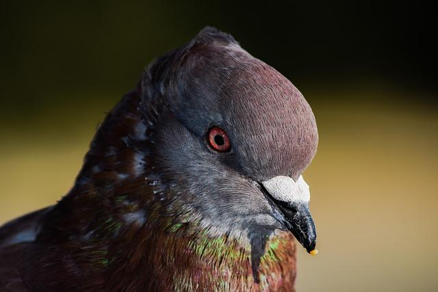 Pigeon, Bird, Head, Eye, Close Up, Nature, Animal