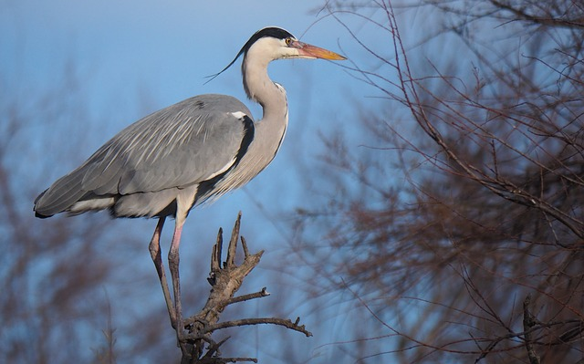 Nature, Fauna, Bird, Heron, Wader