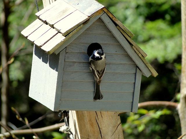 Bird, Chickadee, Birdhouse, Nesting, Nature, Perched