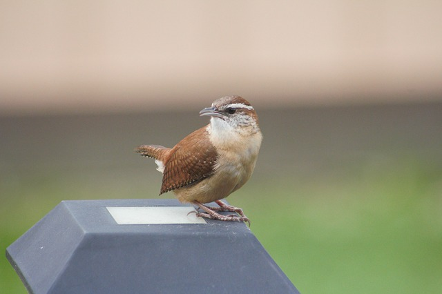 Outdoors, Wildlife, Bird, Nature, Wren