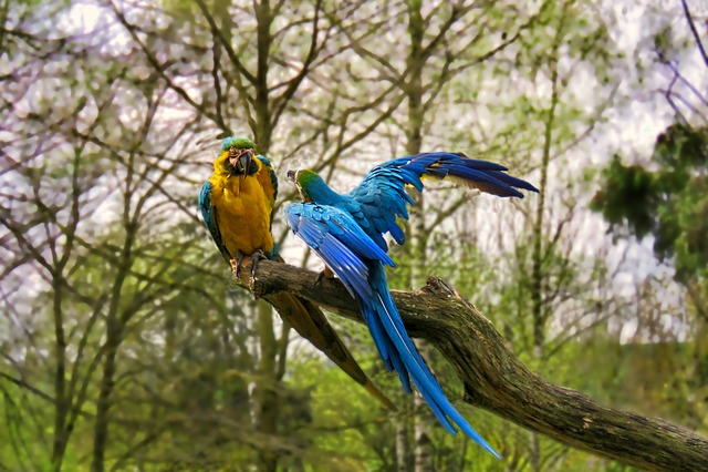 Nature, Bird, Tree, Parrots, Lecture