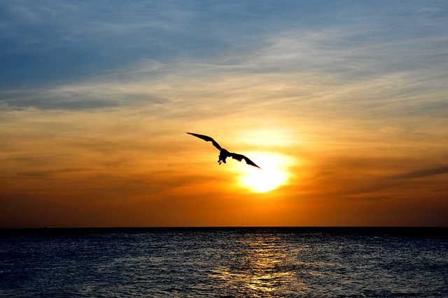 Aruba, Bird, Nature, Animal, Wildlife, Tropical, Fowl
